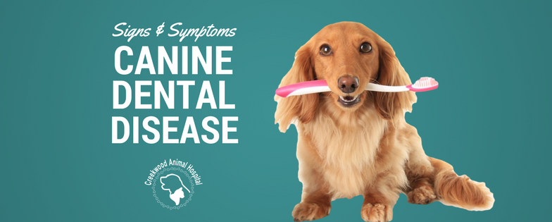 Creekwood Canine Dental Disease